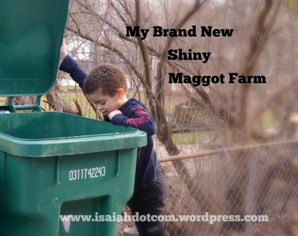 maggot farm.jpg